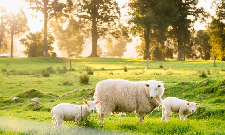 Sheep Farmers Could Profit By Shifting To Forest Research Shows Archive News Archive The University Of Sheffield