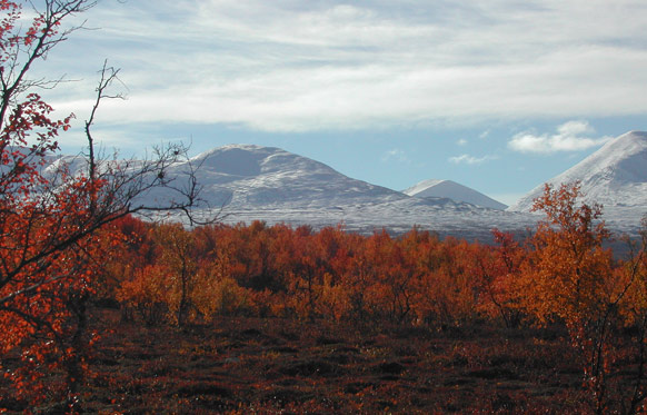 A birch forest at the edge of tundra by I Hartley