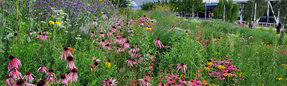 Meadow planting at the London Olympic Park