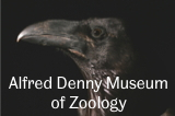Alfred Denny Museum of Zoology website link