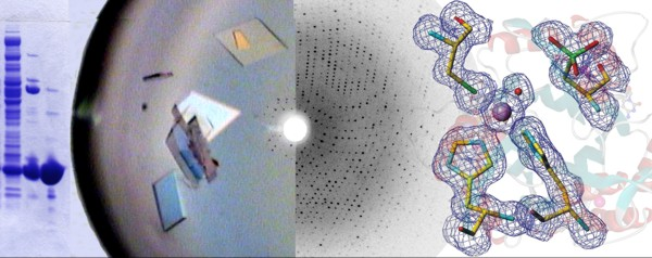 research papers related to x-ray crystallography
