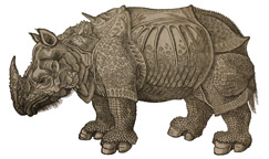 Rhinoceros by Edward Topsell