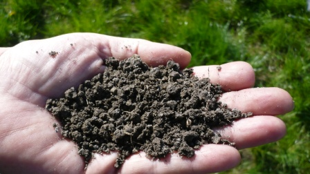 Benefits of soil carbon
