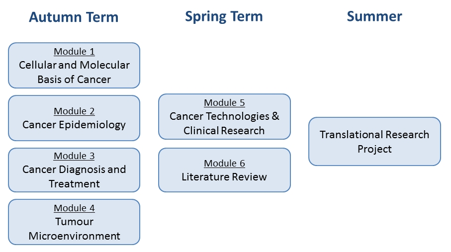 overview - Structure - Old Translational Oncology - Masters