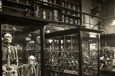 Old zoology museum