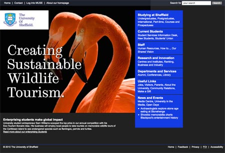 Image: Flamingos Text: Creating sustainable wildlife tourism