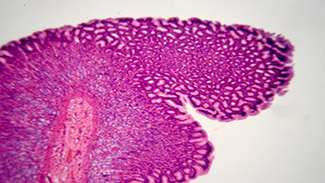 microscopic view of gastrointestinal tract