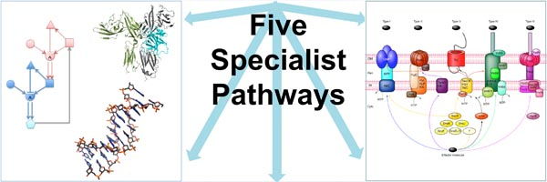 Five Specialist Pathways