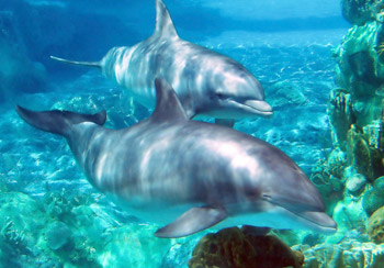 Dolphins in the oceanD