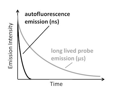 Graph showing short and long lived fluorescence over time