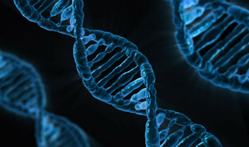 Does social stress affects genes?