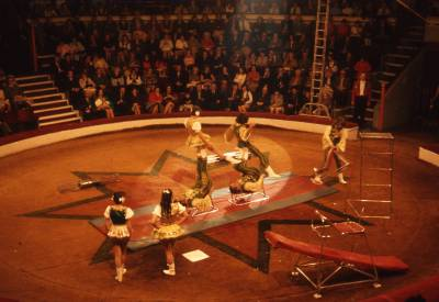 The Birds at Great Yarmouth Hippodrome Circus, 1972