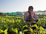 Person in field