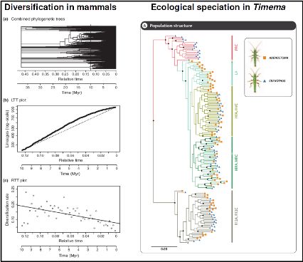 Diversification in animals and ecological speciation in Timema