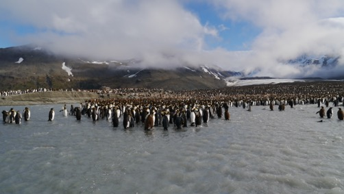 Penguins on the artic melting
