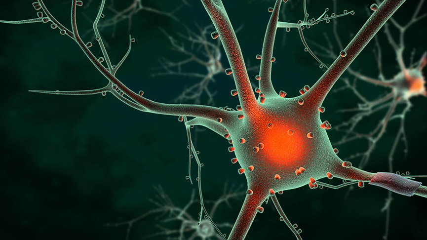 New Gene Therapy Treatment Routes For Motor Neurone