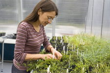 Photo of researcher in growth facility