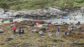 Field Courses - Anglesey