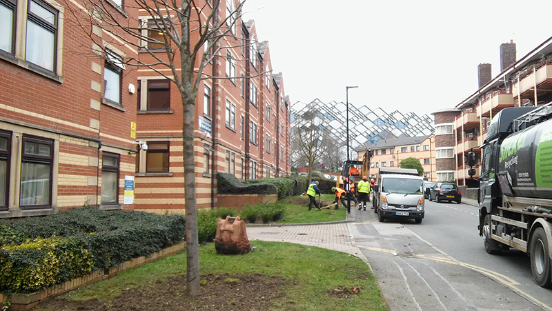 Tree relocation Solly Street