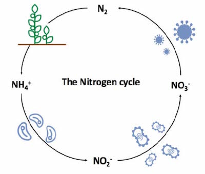 nitrifying our earth news and events chemistry the university
