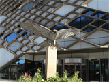Allen - the Peregrine Falcon statue