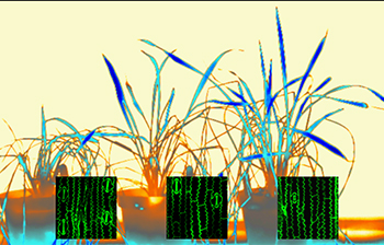 Thermal images of plants recovering after drought with stomatal images