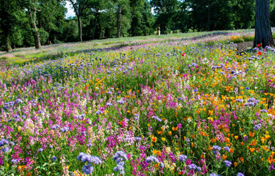 annual meadow