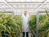 A scientist from the University of Sheffield at the advanced plant growth facility