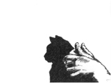 Cat Shadow Puppet - one of the specially commissioned images for the performance by Penny McCarthy