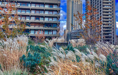Barbican Beech Gardens on a blustery day in November