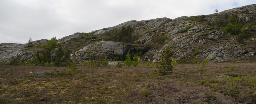 Plants killed by an extreme event which affected heathland vegetation across northern Norway