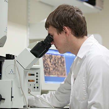 Research at the University of Sheffield