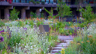 Nigel Dunnett wins double Landscape Institute Award for game-changing urban planting