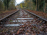 Leaves on a railway line