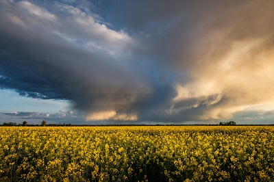 Image of a thunderstorm over a yellow field