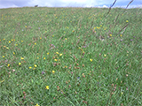 Image of Peak District grassland