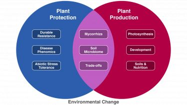Plant protection, production, environment venn