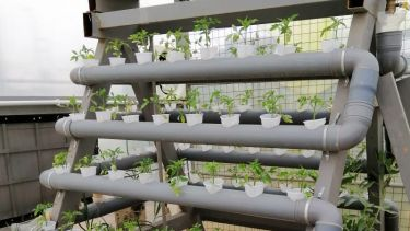 Plants growing in Za'atari refugee camp using hydroponics