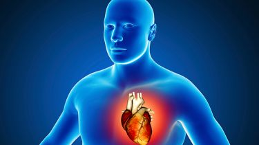 A blue 3D image of a person with a heart highlighted.