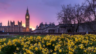 Picture of parliament at sunset, with flowers in the foreground