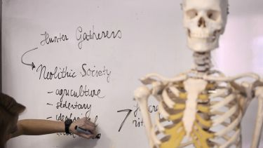 A lifesize skeleton replica in front of a whiteboard containing keywords to do with the prehistoric era.