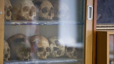 A close up of a cabinet containing human skulls.