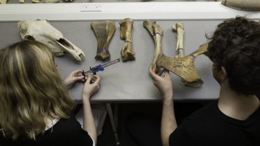 Two archaeology undergraduate students examining animal bones in a lab.