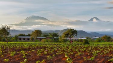 A field of green crops with Mount Kilimanjaro in the background.