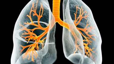 Image of lung structure