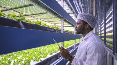 African microgreen researcher studying stacks of hydroponic plant crops in a vertical farming facility.