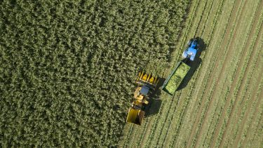 Ariel picture of a field of crops being harvested by two tractors