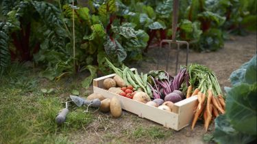 Picture of a box of allotment produce on the ground with green plants in the background