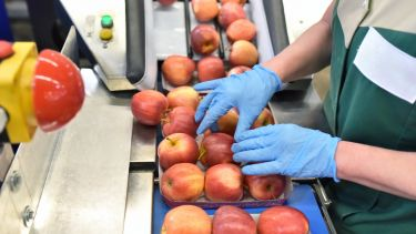 food factory: assembly line with apples and workers - stock photo