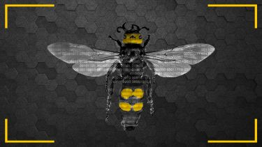 Bee on honeycomb background